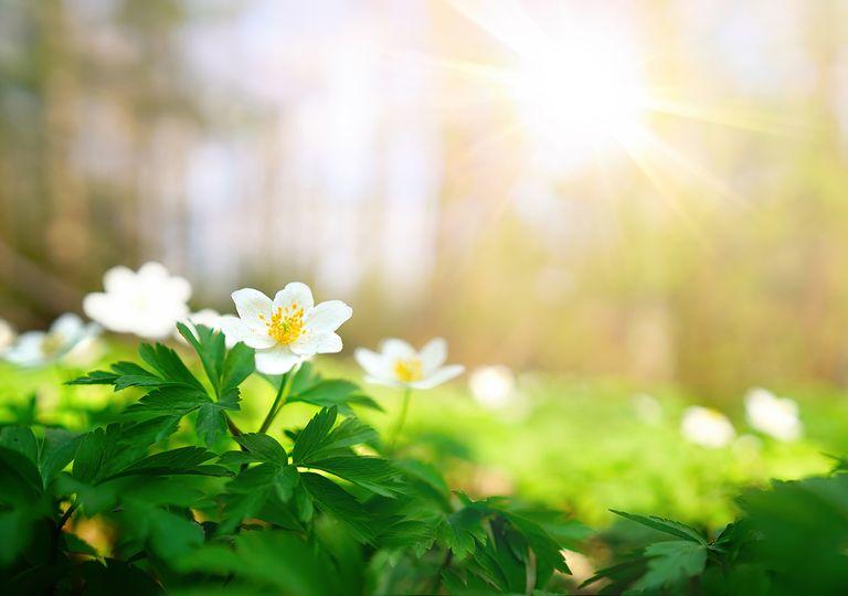 Primavera «en estado de emergencia»