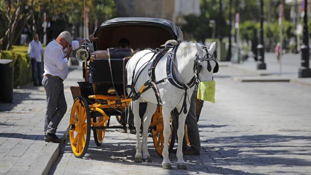 La pandemia de los coches de caballo en Sevilla: sin turismo no hay trabajo