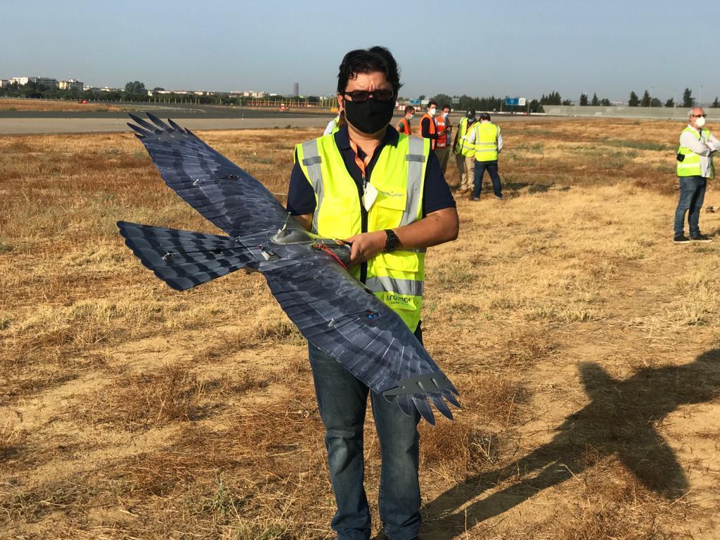 Un 'halcodrón' para controlar la fauna en el Aeropuerto de Sevilla