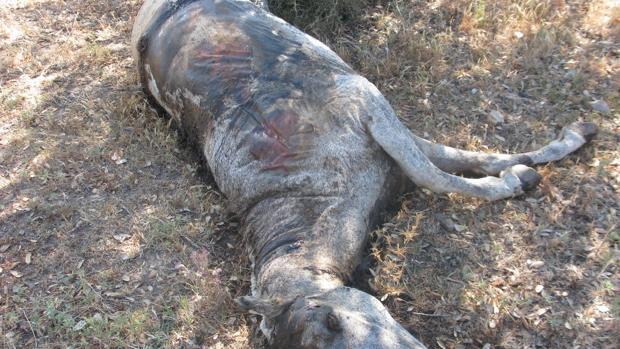 Abandonó a varios caballos hasta su muerte en La Línea aunque cobraba por su manutención