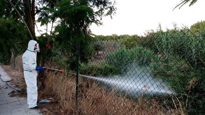 Salud confirma dos casos más de virus del Nilo en la provincia de Sevilla